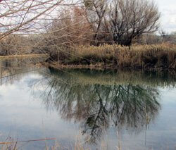 Verde River lagoon park with winter tree reflection on water represents nature setting, seeking signs, divining walk