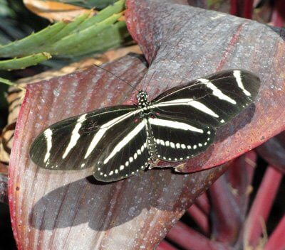 Fluttering of Butterfly Wings Ripple in My Heart