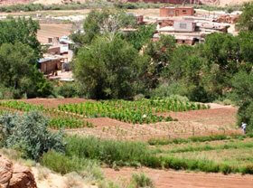 Hopi cornfield green with new growth. Hopis work to preserver their lands and ancient way of life.