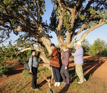 4 ladies touching a big juniper tree symbolizes participating with universal patterns of ceremony and being in reciprocity with Nature.