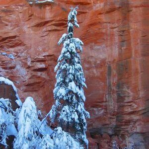 Red cliff with tall fir tree weighed down with snow. Represents Sedona in mid-winter, Discover Sedona and Spirit of Sedona Welcome Circle