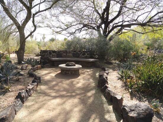Garden bench under leafless trees, long shadows of winter illustrates sense of respite of the desert in winter