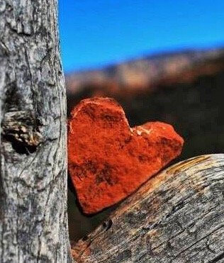 heart shaped red rock in tree symbolizes mystic vision retreats with heart connection with nature