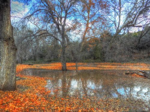 Fall leaves of orange encircling a Sedona pond and leaves have fallen.