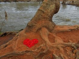 Red heart shape at base of tree next to Oak Creek represents connecting heart to heart with nature's natural life forces.