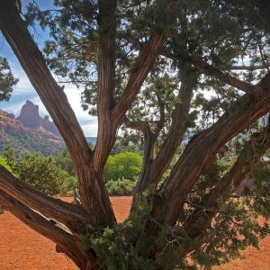 Sedona outdoor seminars: vortex introduction, full moon, Spirit of Sedona circle